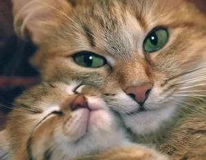 LOVELY 猫