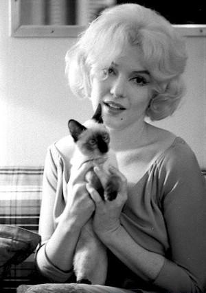 Marilyn Monroe And Her Kitten