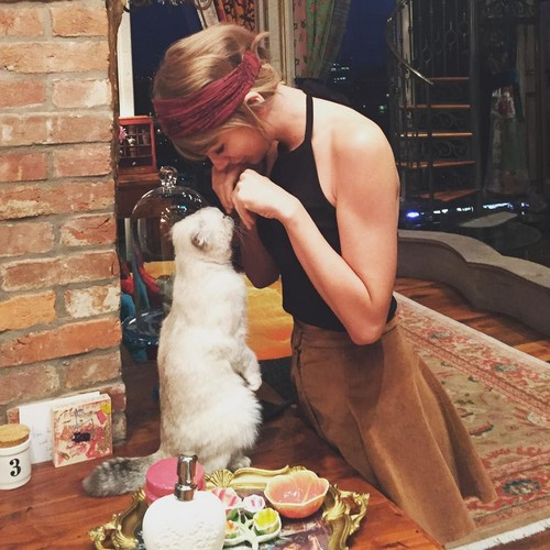 Taylor rapide, rapide, swift fond d'écran entitled Meredith