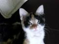My Naughty Bella 💕 - yorkshire_rose photo