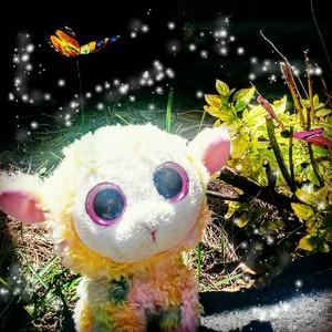 Mystical 子羊, ラム