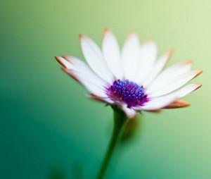 Nice flor 600x507
