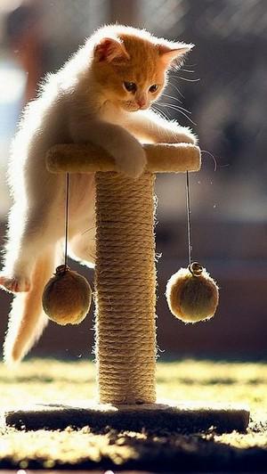 Playful Kitry