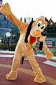 Pluto - walt-disney-theme-parks photo