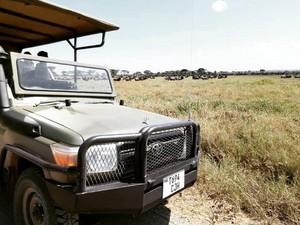 Reuel Safaris