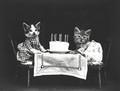 The Birthday Party  - gdragon612 photo