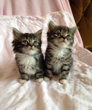 Two Adorable Kittebs
