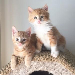 Two Adorable বেড়ালছানা