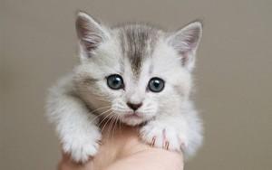 adorable anak kucing