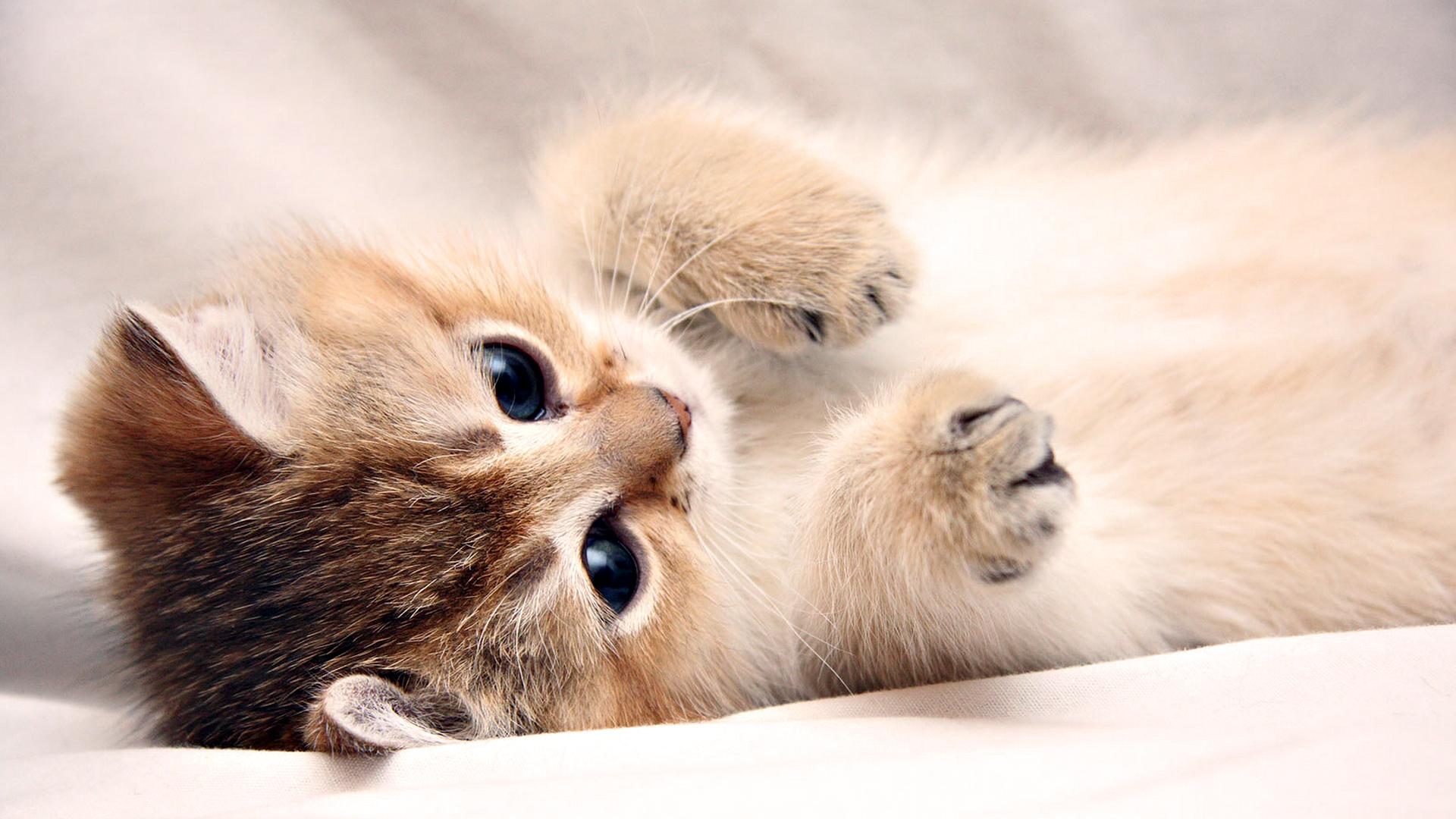 Kittens Karatasi La Kupamba Ukuta Entitled Adorable