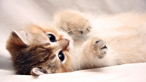 adorable chatons