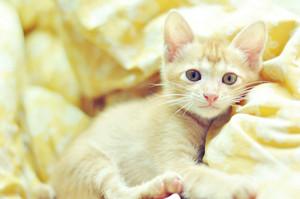 adorable mèo con