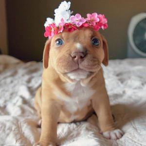 flor pup