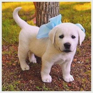 adorable cún yêu, con chó con