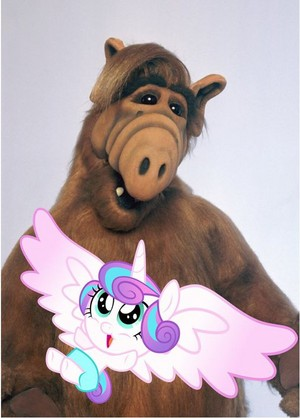 alf and flurry hati, tengah-tengah sejak shanealf1995 d9ze3ty