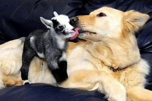 animal buddies