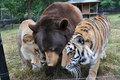 animal buddies - animals photo
