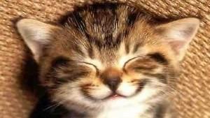 동물 giving us a smile :)