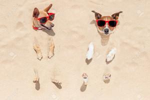 strand dogs