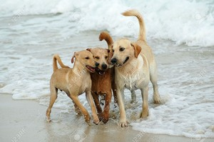 strand dogs