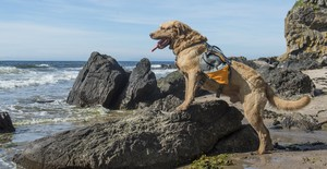 ビーチ イヌ