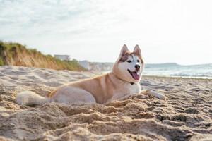pantai Anjing