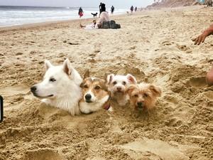 바닷가, 비치 개