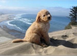 plage chiens