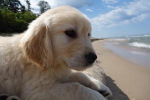 de praia, praia cachorros