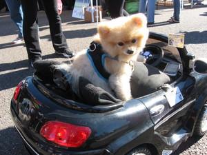 beep beep...tiny driver on the road