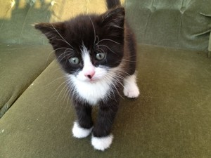 black and white chatons