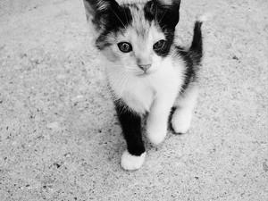 black and white Kätzchen