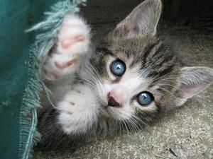 blue eyed kitties