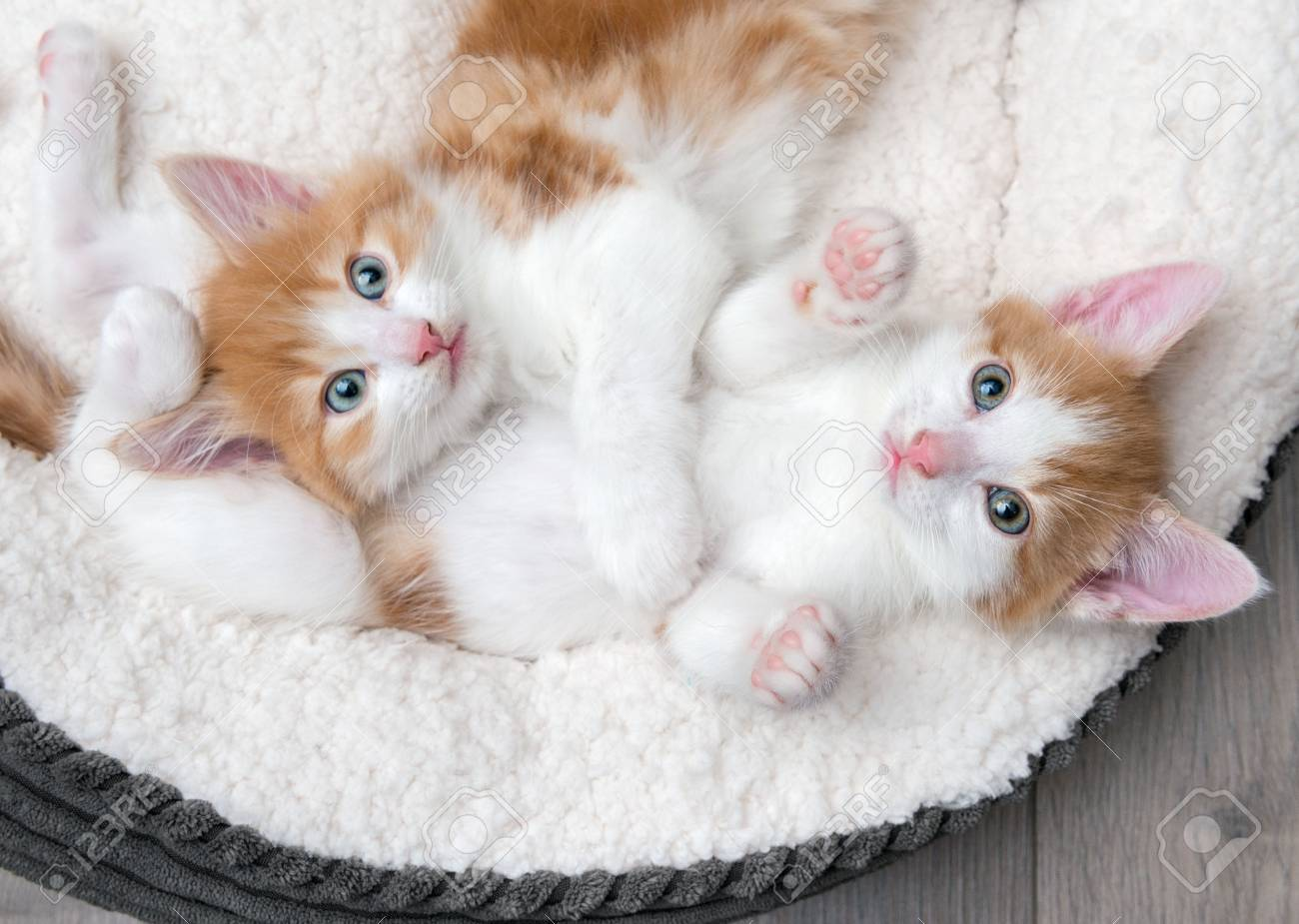 Kittens images blue eyed kitties HD wallpaper and background photos