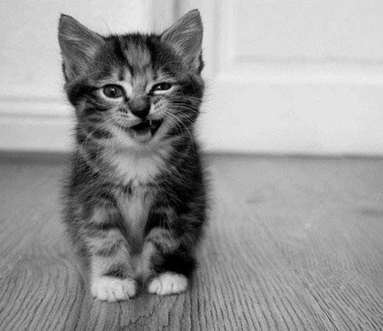 cute kittens images c mon give us a wink wallpaper and background