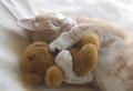 catnapping - greyswan618 photo