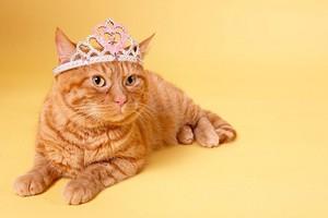 猫 and crowns