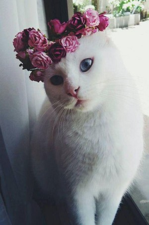 cats and crowns
