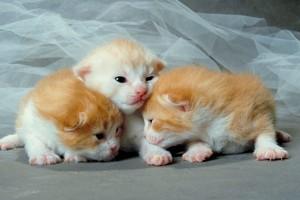 cozy gatinhos
