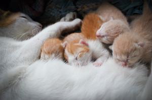 cozy mèo con