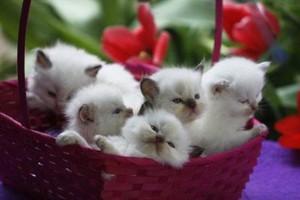 cozy kittens