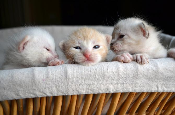 cozy little kittens