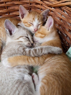 cozy little kittens