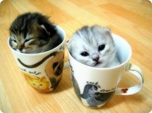 cozy little 小猫