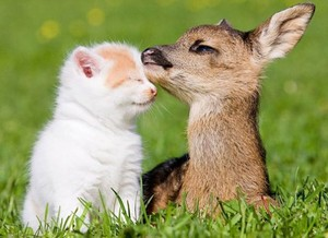 cute animal buddy pic