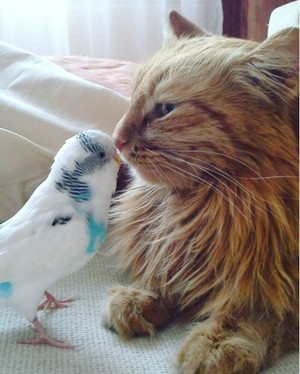 cute cat and bird buddy pic