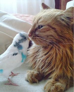 cute kitten buddy pics
