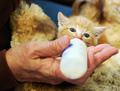 cute gattini drinking bottle