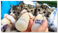 cute chatons drinking bottle