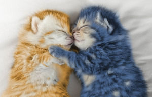 cute gatinhos enjoying a kitty nap